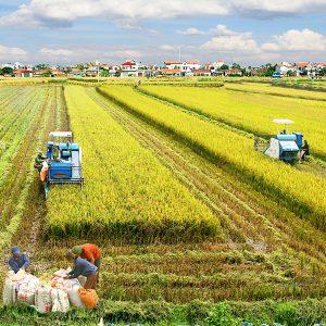 Tiếp tục rà soát các điều kiện kinh doanh ngành nông nghiệp