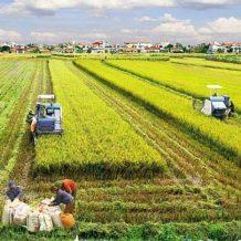 Hạn mức sử dụng đất nông nghiệp tại nông thôn và các quy định liên quan